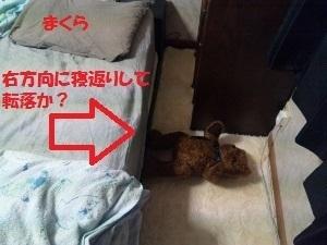 不思議な落ち方 (300x225).jpg