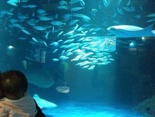 沢山の魚.jpg